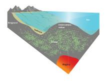 Största svampmarkerna finns under havet
