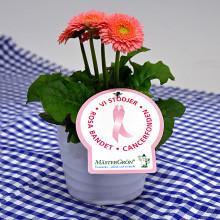 Dagens Rosa Produkt 13 oktober - en Småblommig Gerbera från Mäster Grön