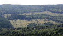 Tolv forskningsprojekt ska göra Sverige och Finland ännu starkare som skogsnationer
