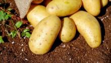 Fiskburgare med potatismos a'la allt i ett