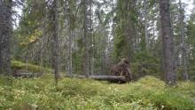 Seminarium: Nedåt eller uppåt för skogens mångfald?