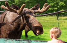 Skånes Djurpark tar hjälp av djurfaddrar