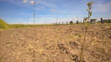 Beplantning beskytter drikkevandsboringer og giver vildtet nye levesteder ved Follerup