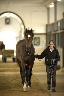 Seminarier om hästsektorns gymnasieskolor