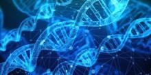Protein förutspår typ 2-diabetes