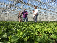Forever&Ever ryter ifrån efter Greenpeaces uttalande om giftplantor i trädgårdsbutikerna