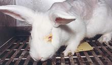 Omkodade celler ska skona försökskaniner