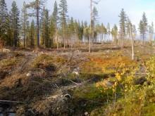 RES cède son projet éolien Vargträsk à Vattenfall