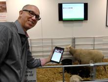 Småskalig lammproduktion blir allt proffsigare