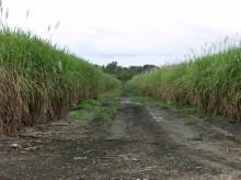 Hållbara Biodrivmedel – Syds Syn – Seminarium på Sida 14 mars kl. 9-11