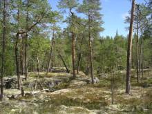 Viktigt att skydda produktiv skog för att bevara biologisk mångfald