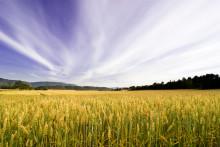 2,4 milliarder kroner til landbruks- og matrelatert forskning