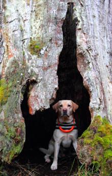 Rätt hjälp räddar husdjur med ryggskador
