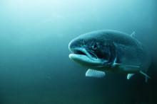 Vi kräver fiskskydd nu