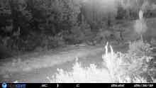Viltkamera fångade varg på bild