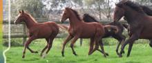 Vi söker dig som inte har egen häst