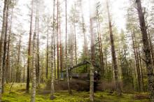 Askan gör att skogen växer bättre