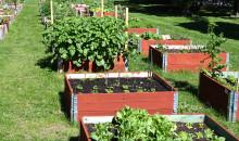 Ny hemsida ska sprida en hållbar livsstil