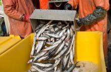 Överlåtbara fiskerättigheter ledde till färre fartyg och ökad lönsamhet