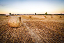 Torka - arbete pågår för att underlätta lantbrukarnas situation