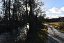 Bättre lekplats för fisken i Mieån skapas