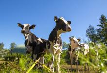 Norrmejerier klättrar i hållbarhetsrankning