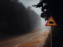 Här är störst risk för viltolyckor – hela listan län för län