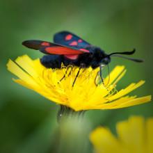 Flyttfåglar, insekter och växter anpassar sig olika mycket till klimatförändringar