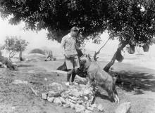Den Svenska Cypernexpeditionen -  nu på Wikimedia
