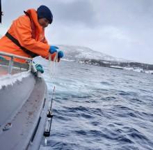 Alger som dreper fisk - er kysten klar?