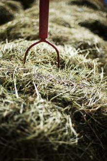 Vilket yrke är vanligast inom hästnäringen? Det berättar HNS på pressträffen i Göteborg 26 februari