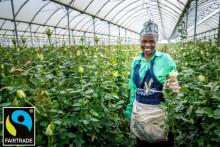 Fairtrade- sertifiointi kaikille Plantagenin ruusuille