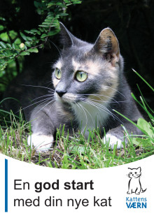 En god start med din nye kat