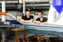 Gårdsfisk finalister till Änglamarkspriset