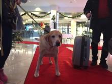 Clarion Hotel Arlanda Airport slår rekord med 370 hundar på nyårsafton