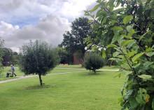 Forenede Service støtter landsindsamlingen 'Danmark planter træer'