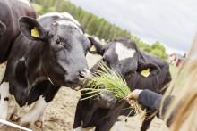 Rådgivning till jordbruksföretag för att hantera konsekvenser av torka