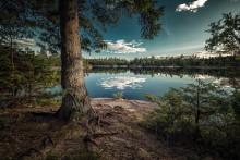 Piotr tog Sveriges bästa trädbild