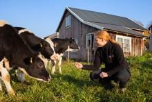 Färre nötkreatur och får på svenska gårdar