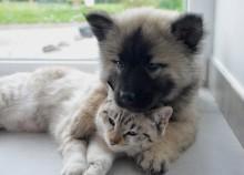 Miljoner för friskare sällskapsdjur