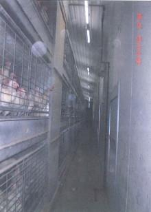 Höjdare inom äggindustrin fortsätter använda olagliga burar framför ögonen på myndigheter