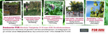 Yrkesseminarium om fruktträdsbeskärning under Nordiska Trädgårdar