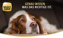SELECT GOLD verbessert Rezepturen im Complete-Sortiment  - XS-Range als neues Ernährungskonzept für sehr kleine Hunde