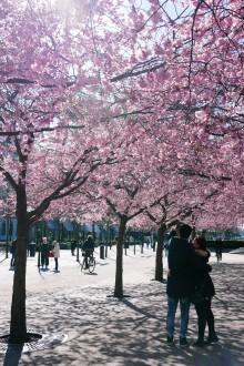 Stockholm fick 13% fler utländska gästnätter i maj