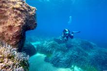 Upptäck Cyperns undervattensvärld