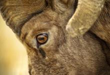 Raub- oder Fluchttier? Die Pupille verrät es