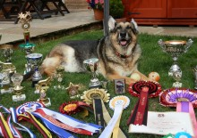 Beth's Dog Show comes to Kent