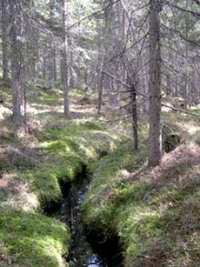 Onödigt åtgärda välmående skogsbäckar