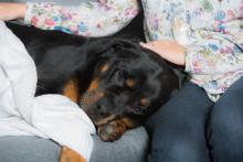 Snuviga tider även för husdjuren