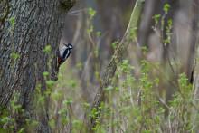 Verdens Skove om Alternativets skovkatalog: Flot og ambitiøst